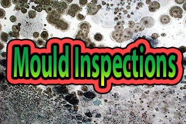 Mould and Home Inspections