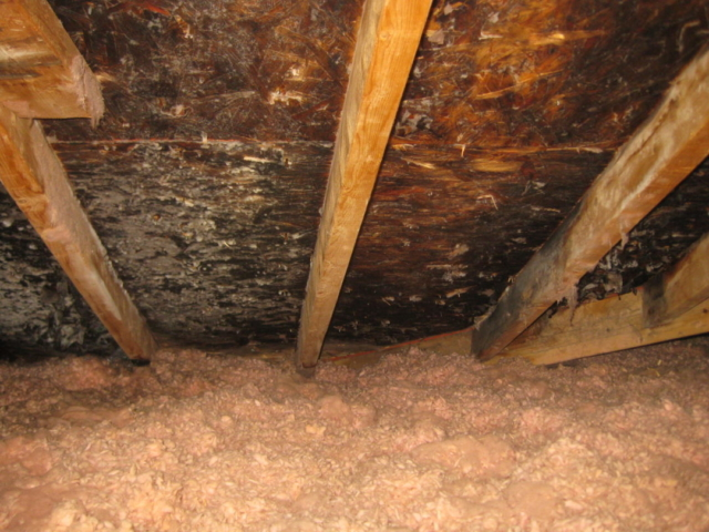 Mould in attic which has damaged roof sheathing in Barrie home.