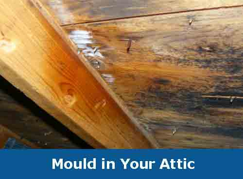 Mould-in-Your-Attic